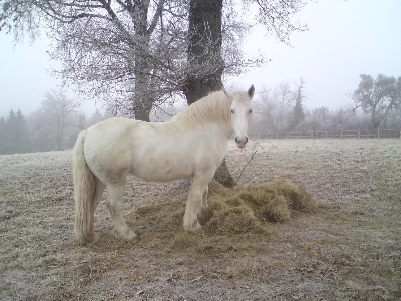 chevauxdeloisirs